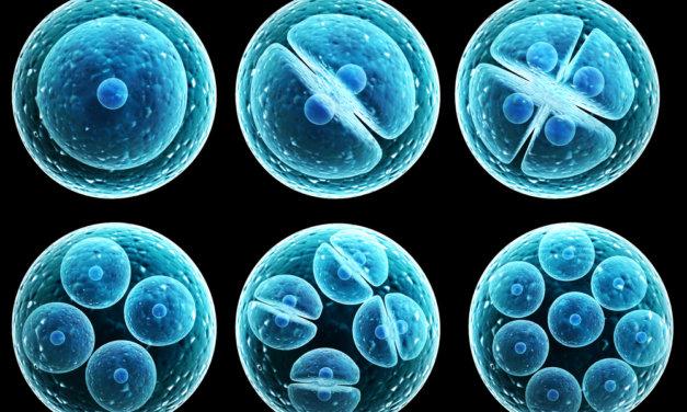 Stem Cells: The Future of Medicine