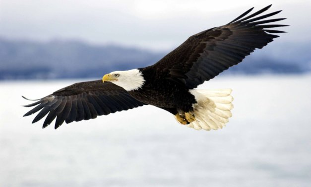 Be the Eagle that Flies